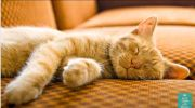 musik kucing tidur